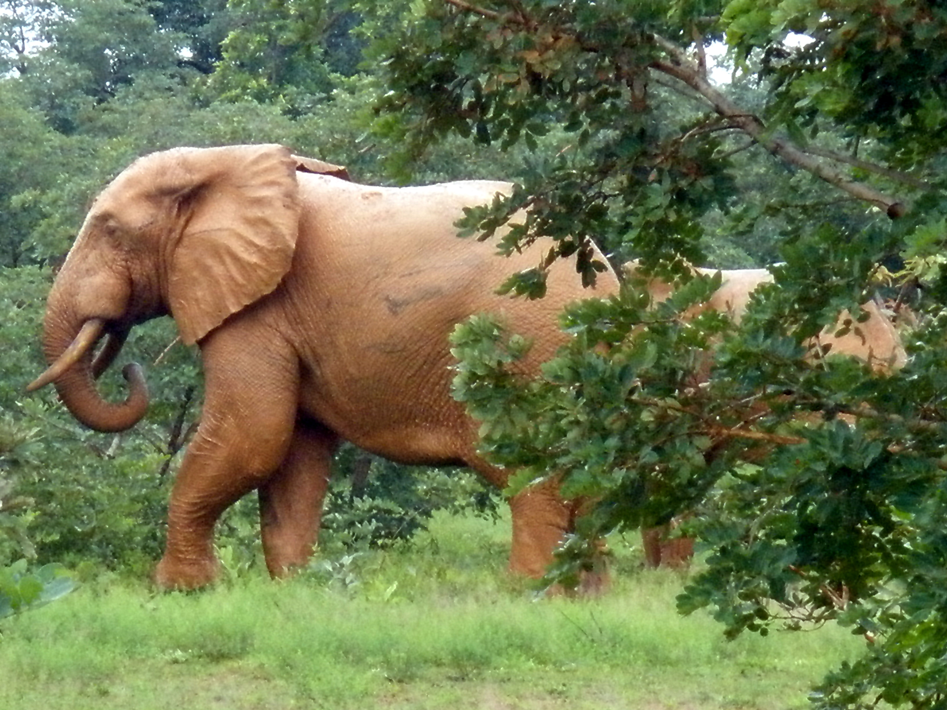 Come up close to the elephants at Mole National Park
